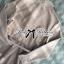 Lady Ribbon Minimal Chic Cotton Shirt Dress with Belt thumbnail 10