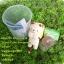 ตุ๊กตา แมว กระถางเซรามิค พร้อมชุดปลูกต้นอ่อน เมล็ดพันธุ์ Wild Strawberry thumbnail 4