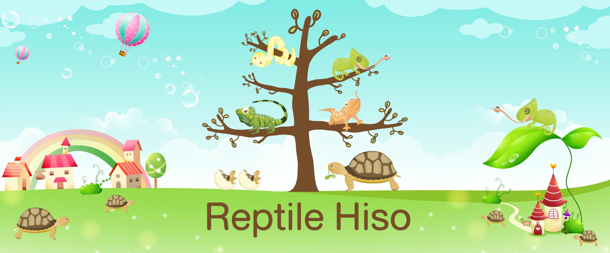 ReptileHiso : ขายเต่าซูคาต้า ขายเต่าบก ฟาร์มเต่ายักษ์ และ สัตว์เลื้อยคลาน