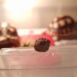 เต่าซูคาต้า กินอาหารที่มีโปรตีนสูงเกินจำเป็น จะเกิดการสะสมนิ่วที่กระเพาะปัสสาวะได้หรือไม่ ?