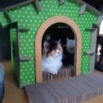 บ้านแมวกระดาษ DIY สีเขียว