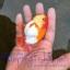 ปลาทอง สิงห์ลูกผสม thumbnail 2
