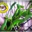 Green Iguana (อีกัวน่าเขียว) thumbnail 1