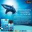 Auswelllife Pure Squalene Tasmanian 1000 mg. ออสเวลไลฟ์ น้ำมันตับปลาฉลาม thumbnail 2