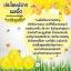 Golden Honey Ball by B'secret มาส์คลูกผึ้ง กลิ้งแล้วหนืด ยืดแล้วมาส์ค thumbnail 11