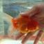 ออรันดา กลาง ขนาด 3 นิ้ว thumbnail 3