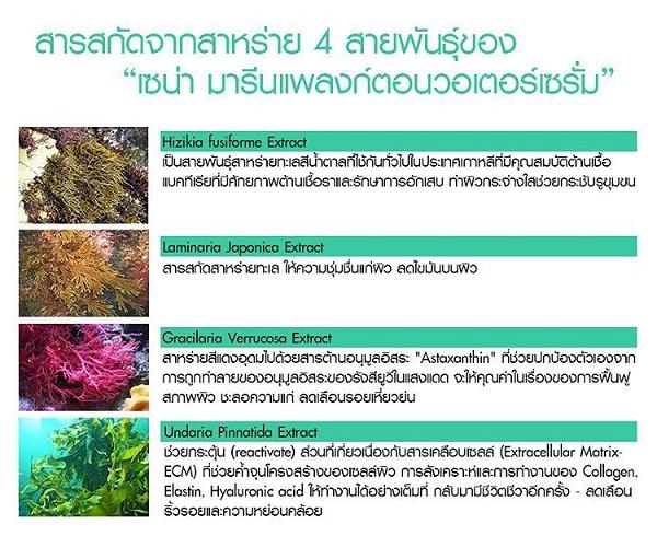 sena marine plankton ของแท้